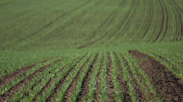 Proiect de lege prin care terenurile agricole să nu mai poată fi revândute decât statului