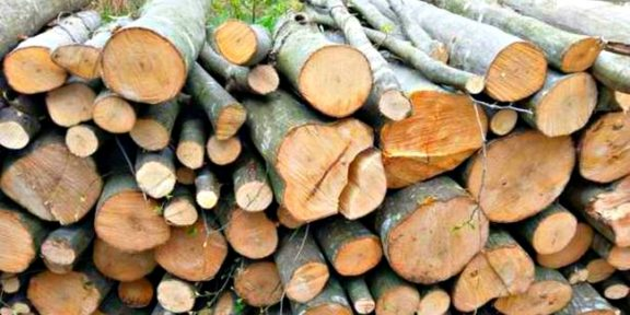 lemne-foc