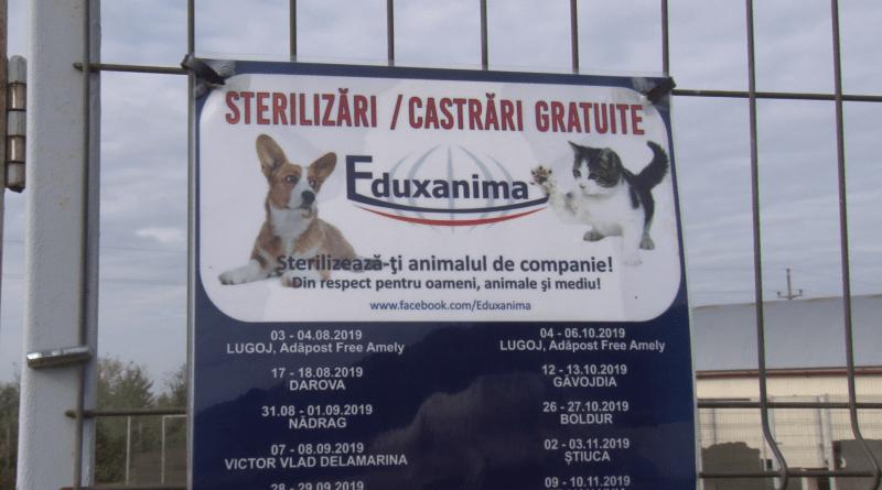 286 DE ANIMALE STERILIZATE ÎN ȘASE CAMPANII