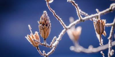 meteo-iarna