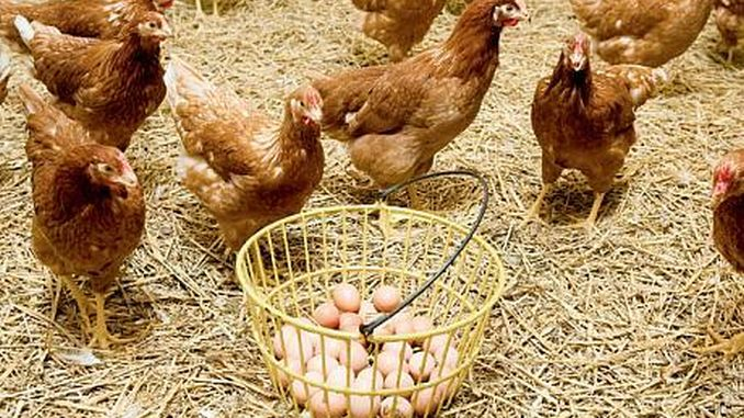 Se interzice vânzarea de ouă și păsări vii în piețele din Timișoara, de frica gripei aviare